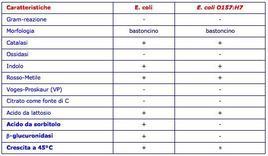 Caratteristiche Escherichia coli