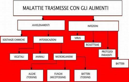 13a) Classificazione delle malattie trasmesse con gli alimenti