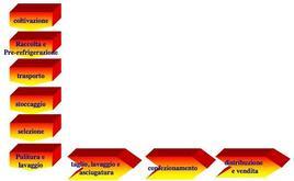 Fasi del ciclo di produzione di vegetali di IV gamma