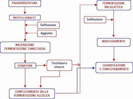 Schema di vinificazione in rosso