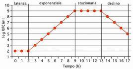 Fig. 3C – Fasi della curva di crescita microbica