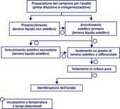 Ricerca qualitativa di batteri patogeni