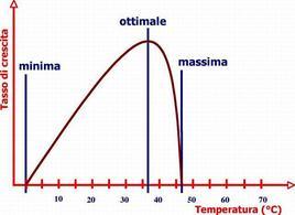 Esempio dell'effetto della temperatura sul tasso di crescita di un batterio