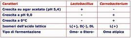 Caratteristiche distintive dei lactobacilli del gruppo III