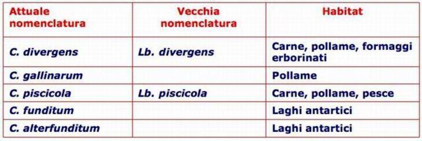 Specie più importanti del genere Carnobacterium