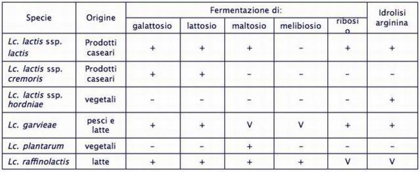 Caratteristiche delle specie del genere Lactococcus