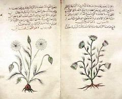 Arabic herbal medicine guidebook. Fonte: Wikimedia Commons
