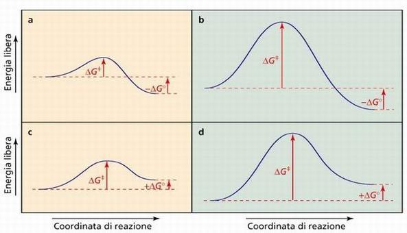 Reazioni esoergoniche e endoergoniche, lenti e veloci