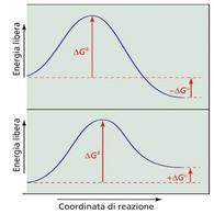 Diagramma energia libera/coordinata di reazione
