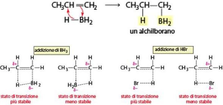 L'addizione di borano è una reazione concertata che evolve attraverso uno stato di transizione ciclico