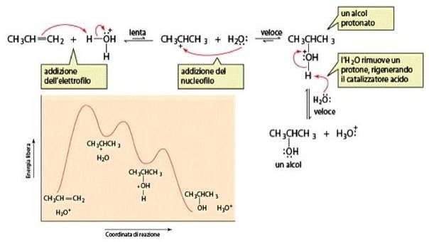 Meccanismo dell'addizione di acqua acido-catalizzata