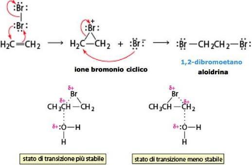Meccanismo della reazione tra un alchene e una molecola di alogeno