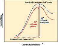 Le reazioni SN1 sono favorite cineticamente dalla polarità del solvente