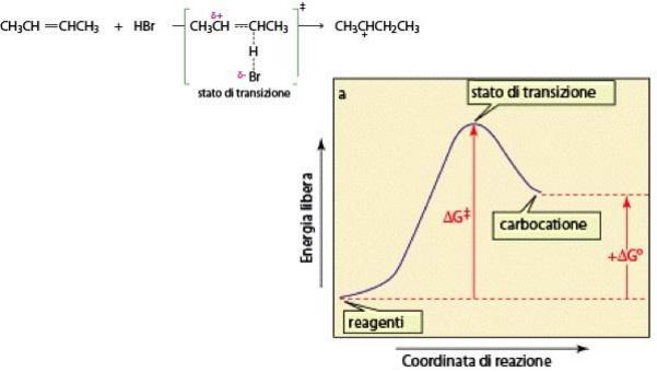 1° stadio: diagramma energia/coordinata di reazione