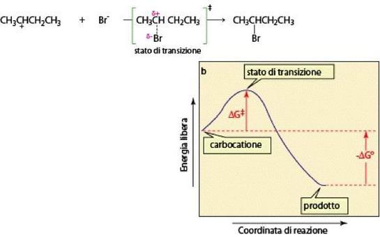 2° stadio: diagramma energia/coordinata di reazione