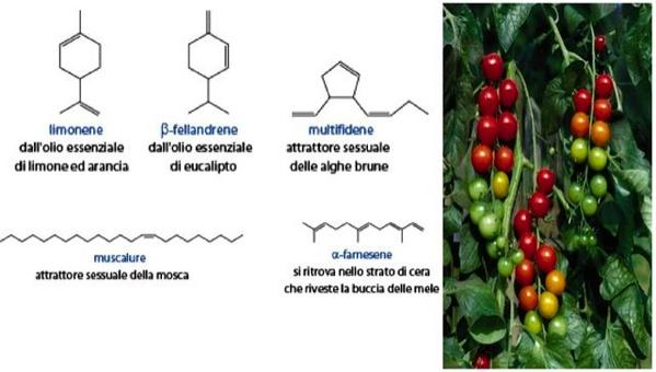 Esempi di alcheni di origine naturale