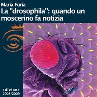 Maria Furia, La drosophila: quando un moscerino fa notizia