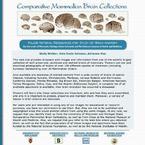 Comparative Mammalian Brain Collections
