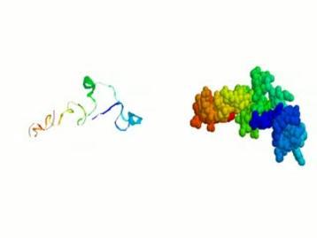 Il processo di folding delle proteine, ovvero il meccanismo di  ripiegamento con cui raggiungono la confomazione biologicamente attiva
