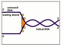 Film sulla duplicazione del DNA