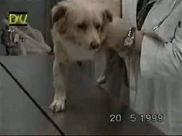 Test del saltellamento