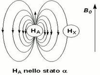 Col disaccoppiamento il protone X è prima schermato, poi deschermato, e così via